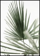Green Palm Leaves No1 Poster