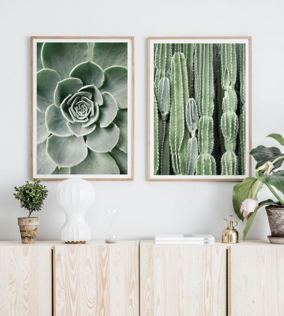 Beautiful cactus green