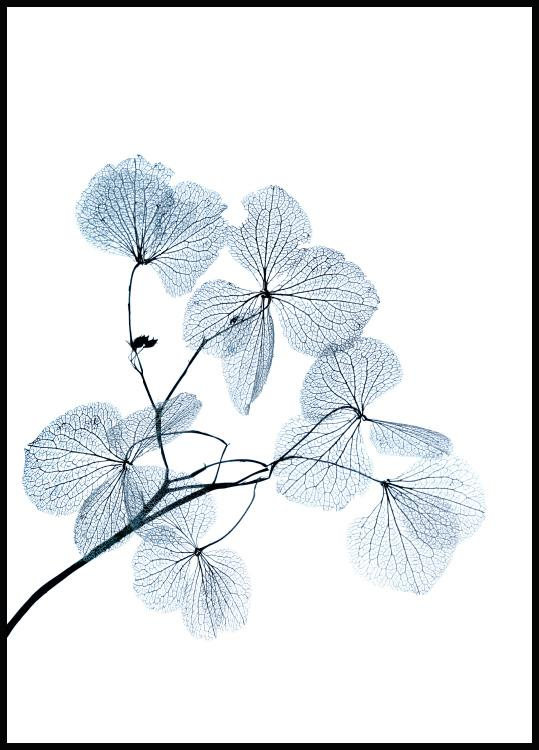 Blue Leaves Poster