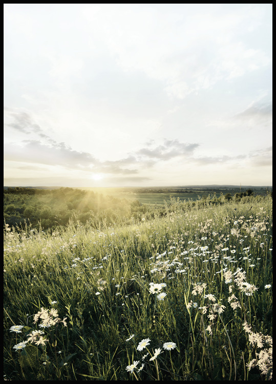 Sunrise Meadow Poster